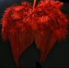 Krídla anjelské 31cm bordové