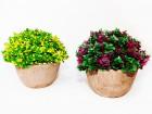 Květy UH v květináči